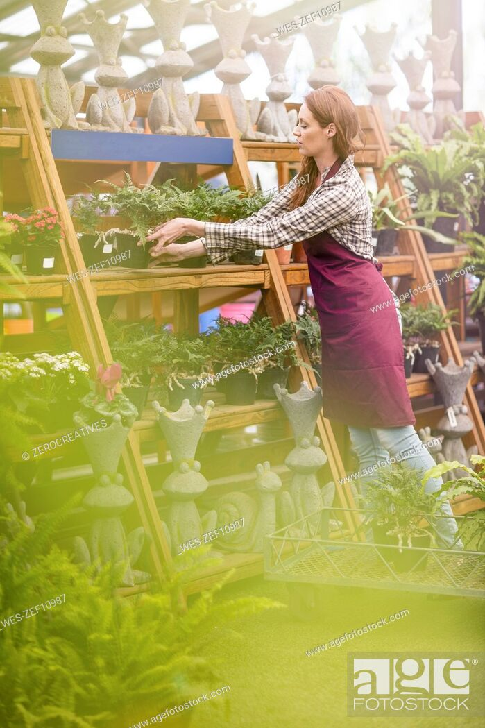 Stock Photo: Woman putting plant pots on stand in garden centre.