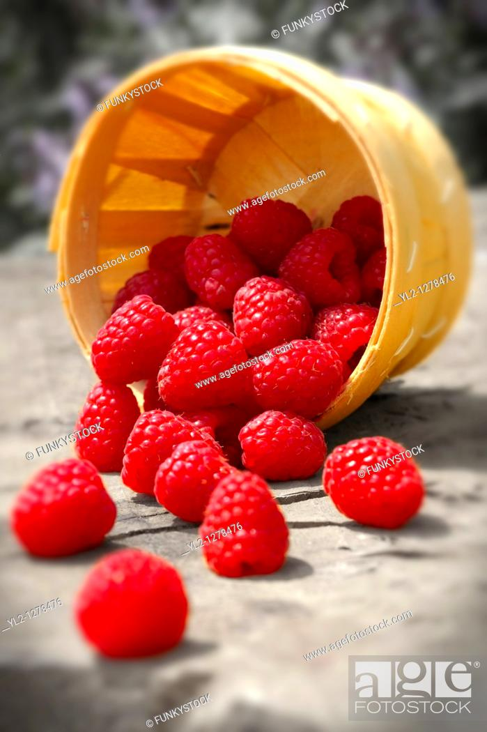 Stock Photo: Punet of fresh picked raspberries.