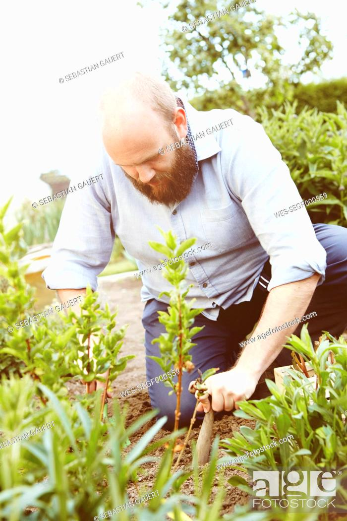Stock Photo: Young man working in garden, sowing plants.