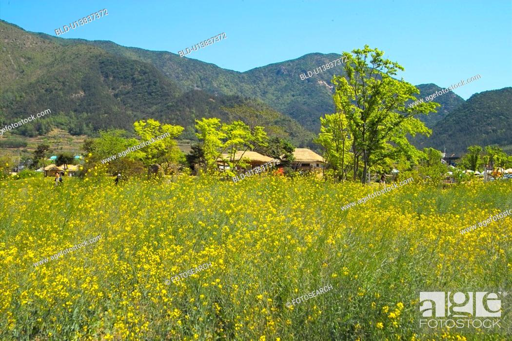 Stock Photo: plant, scenery, mountain, flower, field, plants, nature.