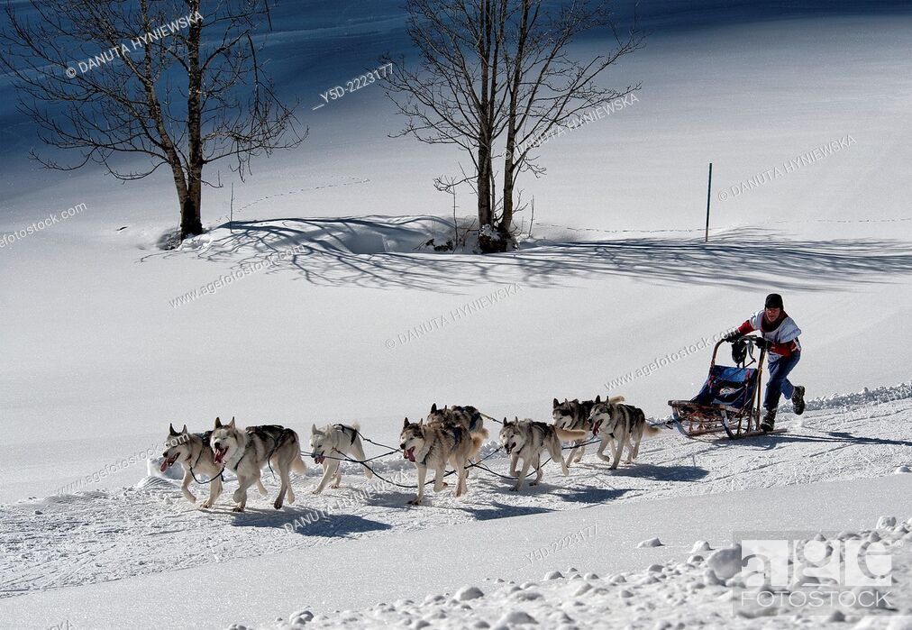 Imagen: Dog sledge race, Gadmen , Switzerland.