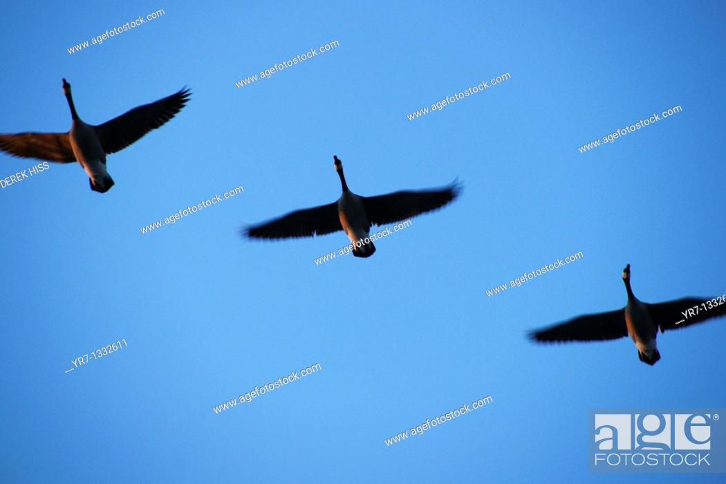 Stock Photo: Flying formation.