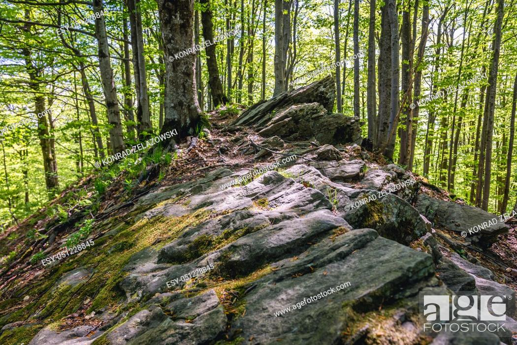 Stock Photo: Rocks on a trail from Wetlina village to Wetlina High Mountain Pasture in Western Bieszczady Mountains in Poland.