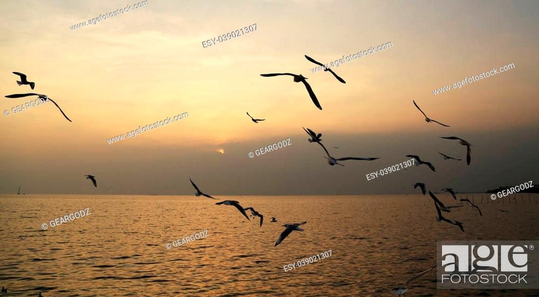 Stock Photo: Seagull with sunset at Bang Pu beach, Thailand.