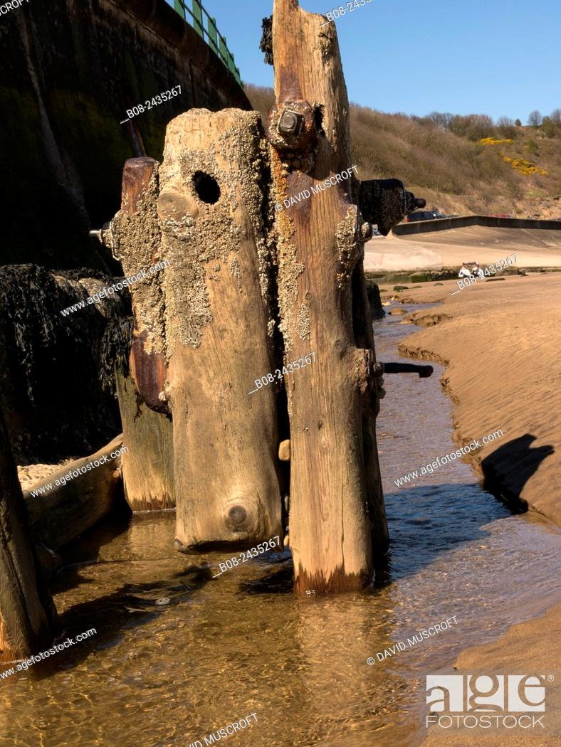 Stock Photo: old wooden pilings on the beach at Sandsend, Yorkshire, UK.