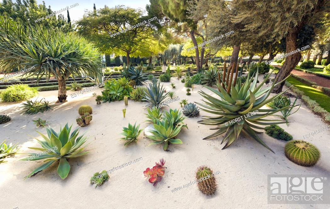 Stock Photo: Cacti and olive trees in the Bahai Gardens at Mount Carmel in Haifa, Israel, Middle East.