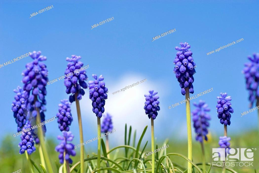Blumen Blumenwiese Botanik Flora Fruhjahr Fruhling Hellblau
