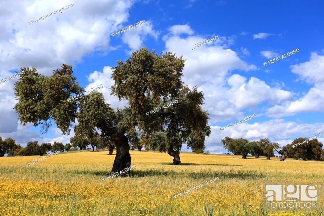 Photo de stock: Pasture. Monfrague Natural Park. Caceres province. Extremadura. Spain.