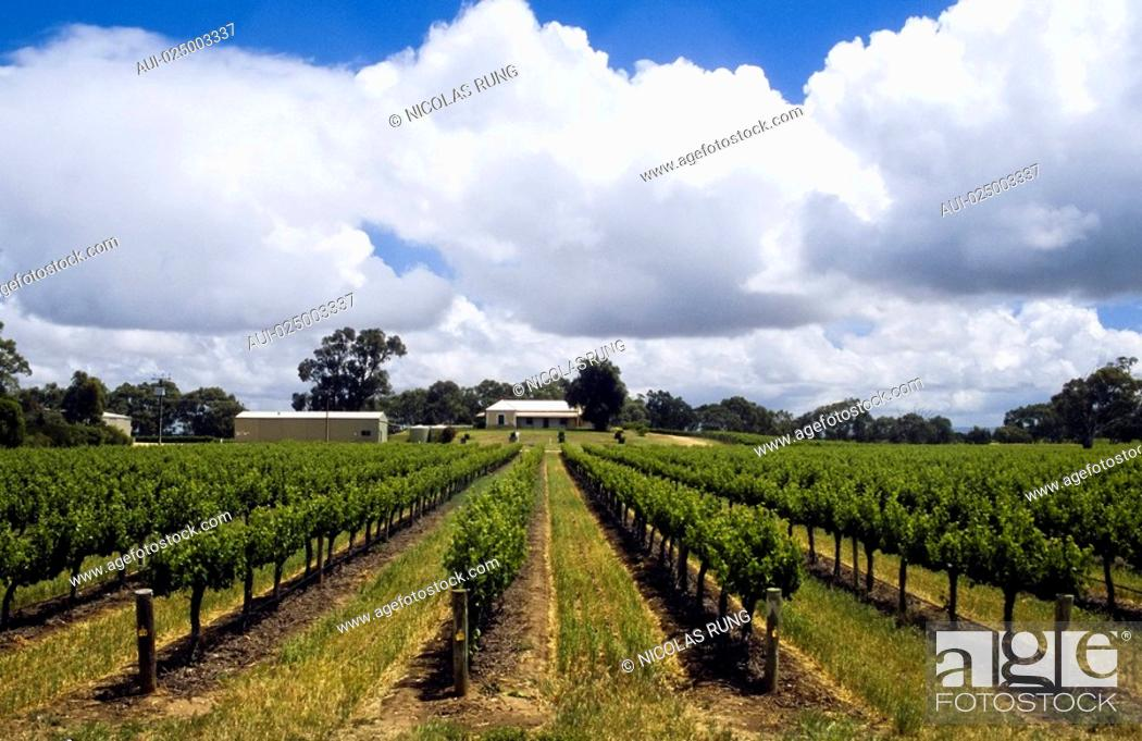 Stock Photo: Southern Australia - Milang Surroundings - Vines.