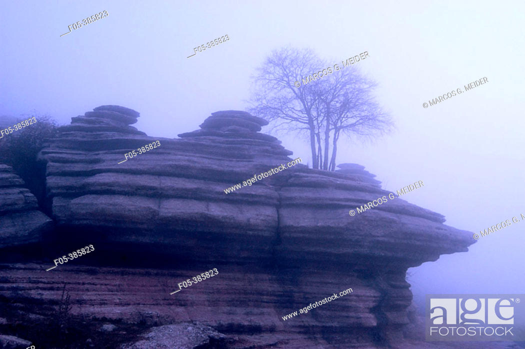 Stock Photo: Tree growing on limestone rock formation in foggy morning. Torcal de Antequera Natural Park, Málaga province, Spain.
