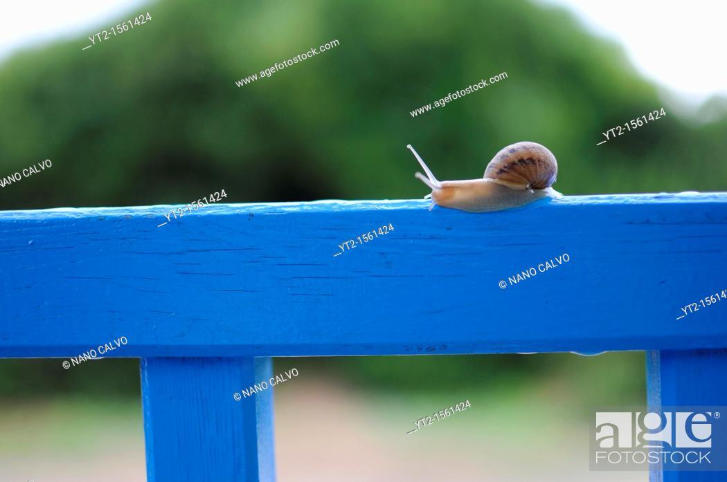 Stock Photo: Snail on blue fence.