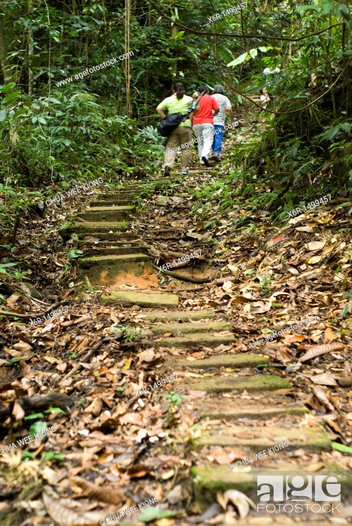 Stock Photo: Jungle Trial of Gunung Garding Sarawak, Malysia.