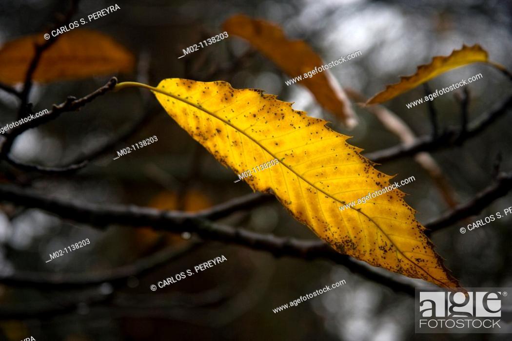 Stock Photo: Kew Gardens at autumn in London, United Kingdom, Great Britain, Europe.