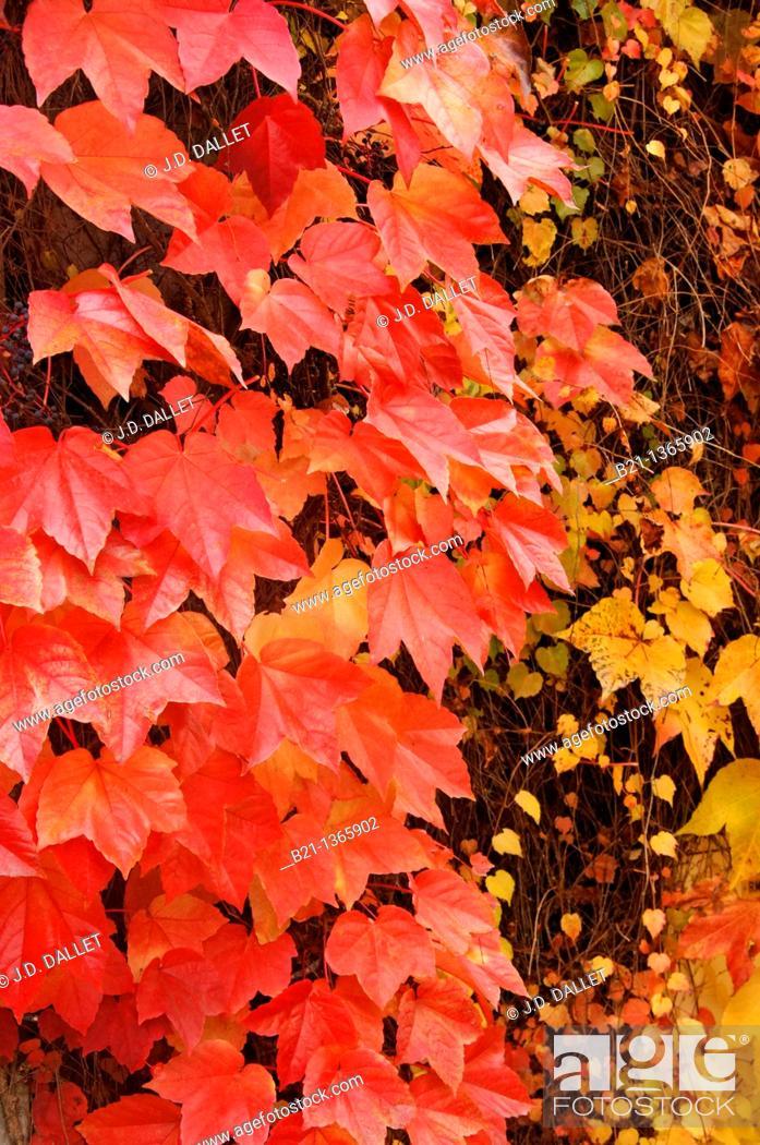 Stock Photo: France-Midi Pyrenées-Gers- autumn at Manciet.