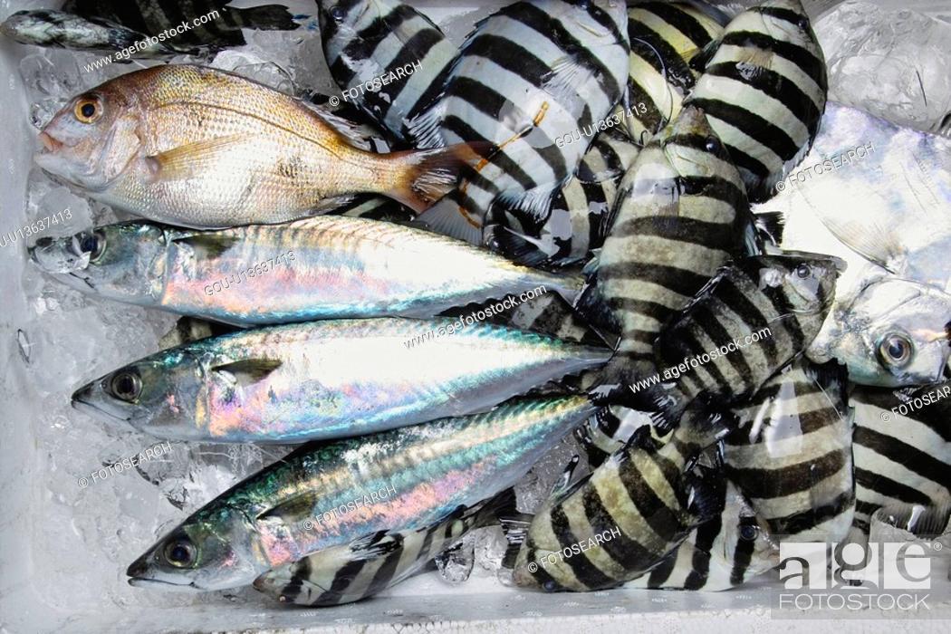 Stock Photo: Parrot fish.