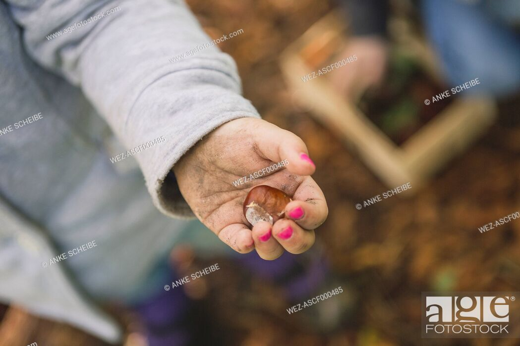 Stock Photo: Girl holding chestnut in hand, close up.