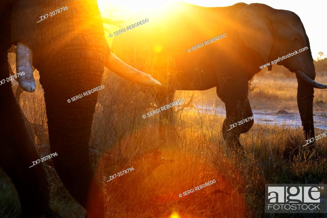Stock Photo: A magical sunset with elephants 4x4 inches from where we vahiculo the game safari camp near Khwai River Lodge by Orient Express in Botswana.