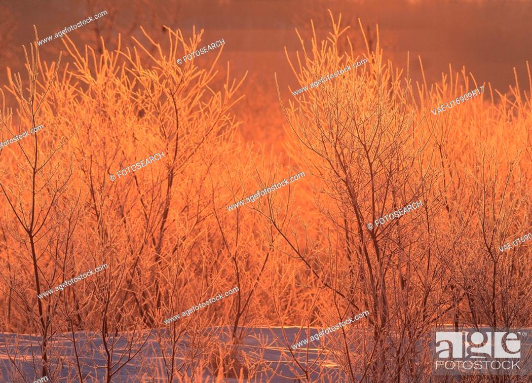 Stock Photo: plants, landscape, plant, tree, winter, scenery.
