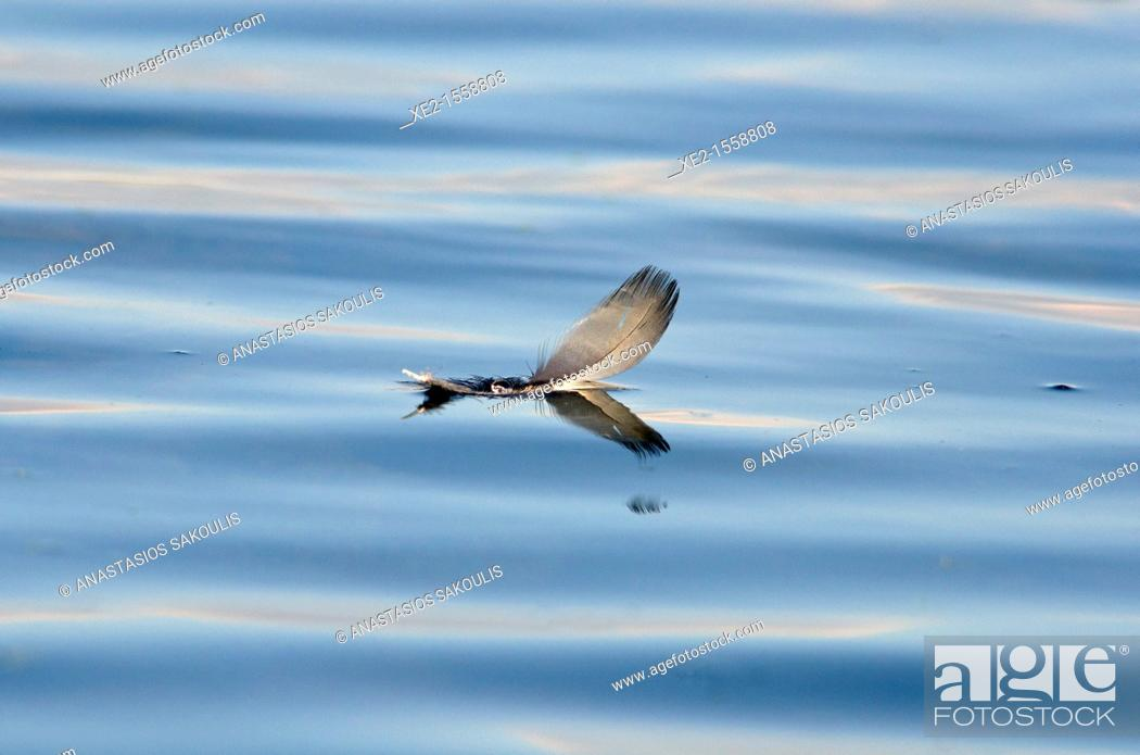 Stock Photo: Feather on water.