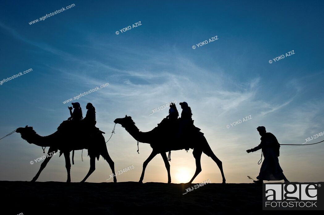 Stock Photo: India, Rajasthan, Jaisalmer, Camel Ride, sunset.