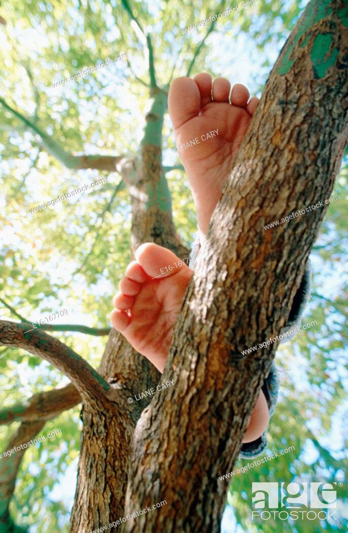 Stock Photo: Feet on branch.