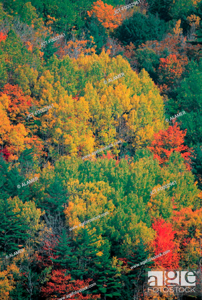 Stock Photo: Canada, forest during Indian summer.