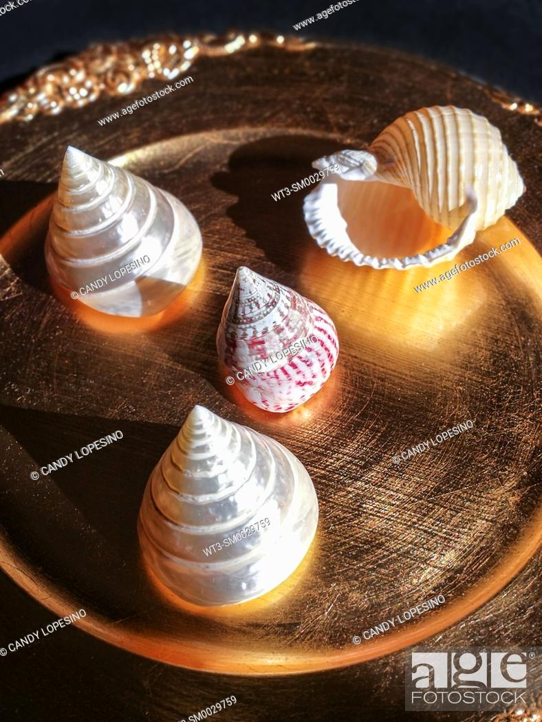 Stock Photo: Four natural sea shells on golden background.