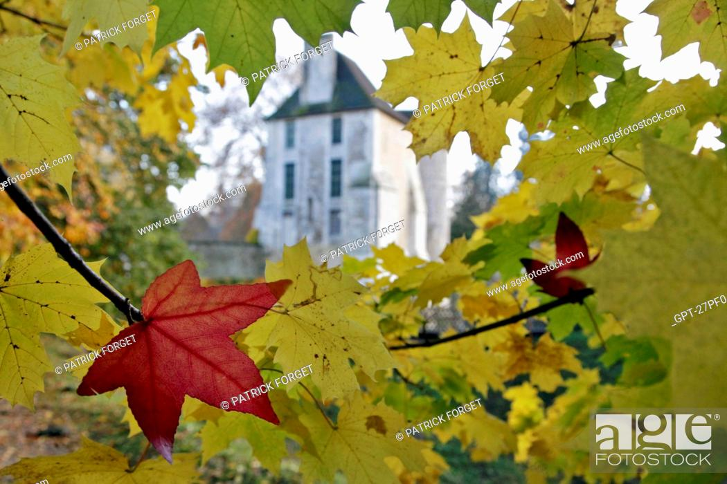 Imagen: MAPLE AND SYCAMORE LEAVES IN AUTUMN, THE CHATEAU AND ARBORETUM OF HARCOURT, EURE 27, FRANCE.