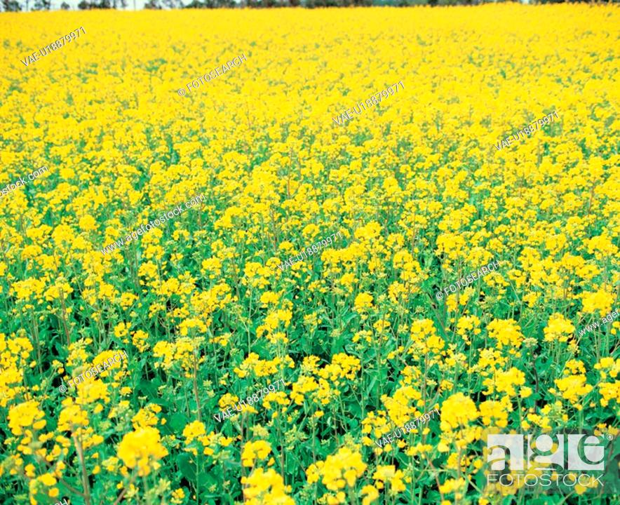 Stock Photo: bloom, flower, flowers, plants, field, blossom, plant.