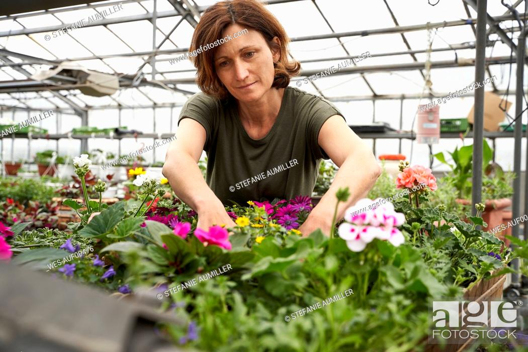 Stock Photo: Woman tending to flowers in a greenhouse.