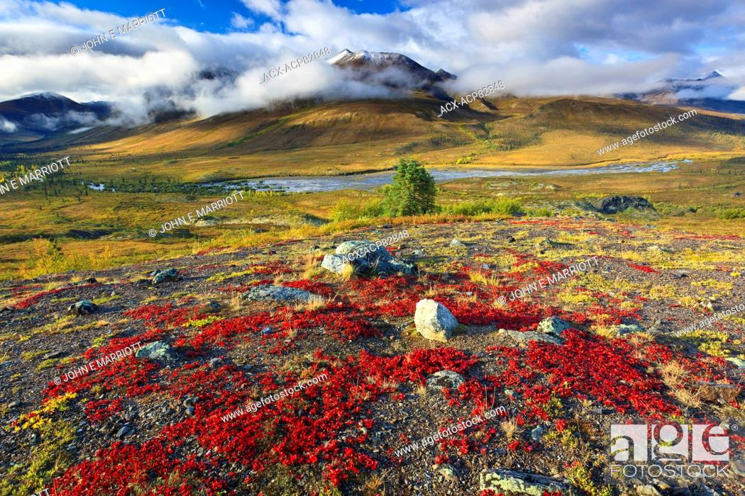 Stock Photo: Spectacular fall colours in the North Fork Klondike River Valley in the Tombstone Mountains, Tombstone Territorial Park, Yukon, Canada.