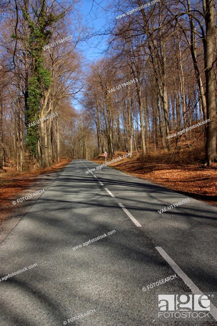 Stock Photo: boulevard, perspective, way, path, road, nature.