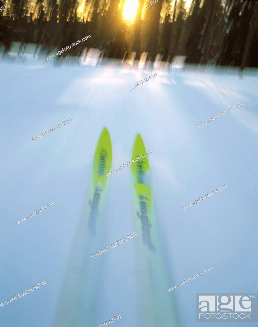 Stock Photo: Skiing, forest, snow, winter, cold, motion, ski. Sälen. Dalana. Sweden.