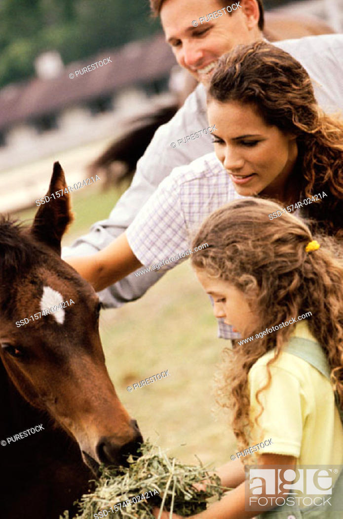 Stock Photo: Girl feeding a horse with her parents.