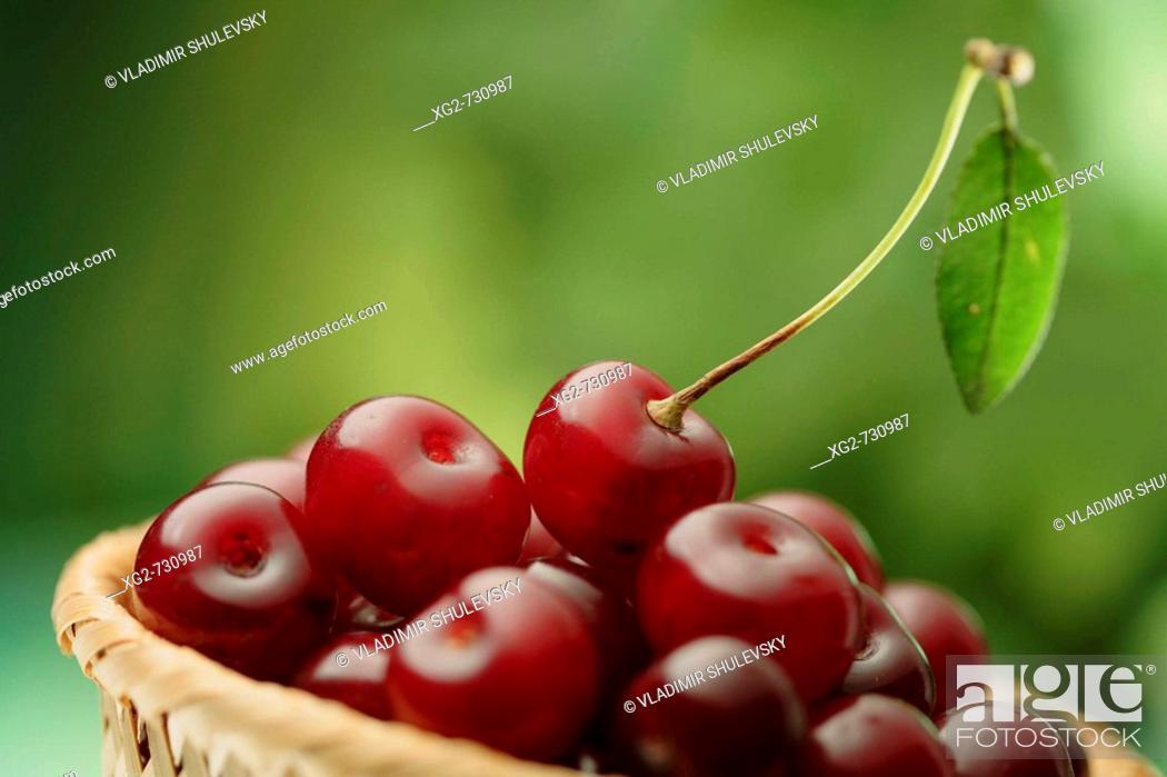 Stock Photo: Basket with ripe cherries.