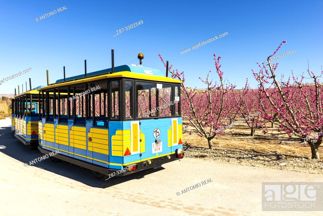 Stock Photo: Tourist train. Flowering. Peach trees in bloom. Cieza. Murcia. Spain.