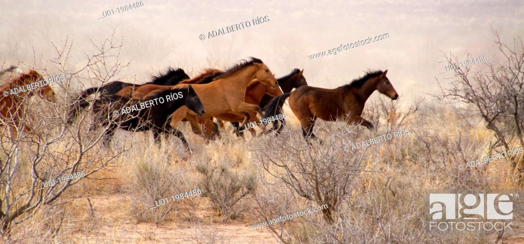 Stock Photo: Horses can live a free life wild or feral surviving without a problem.