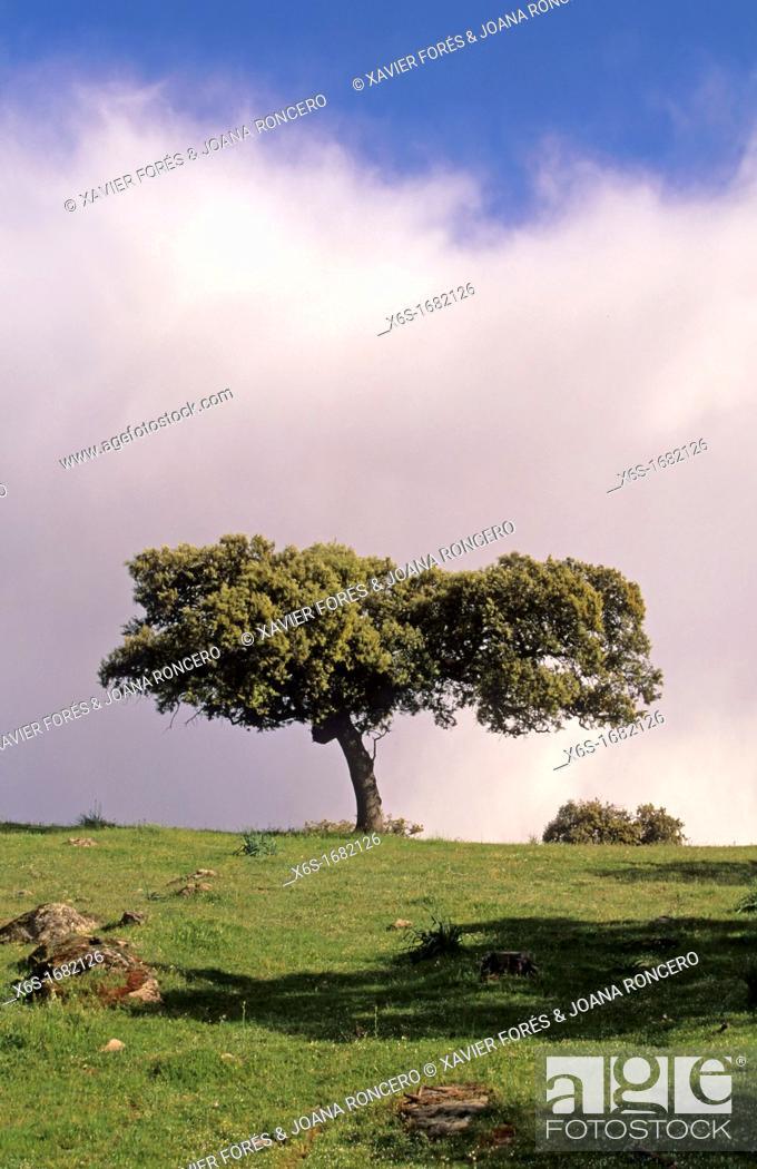 Stock Photo: Natural park of Sierra de Andújar, Jaén, Spain.