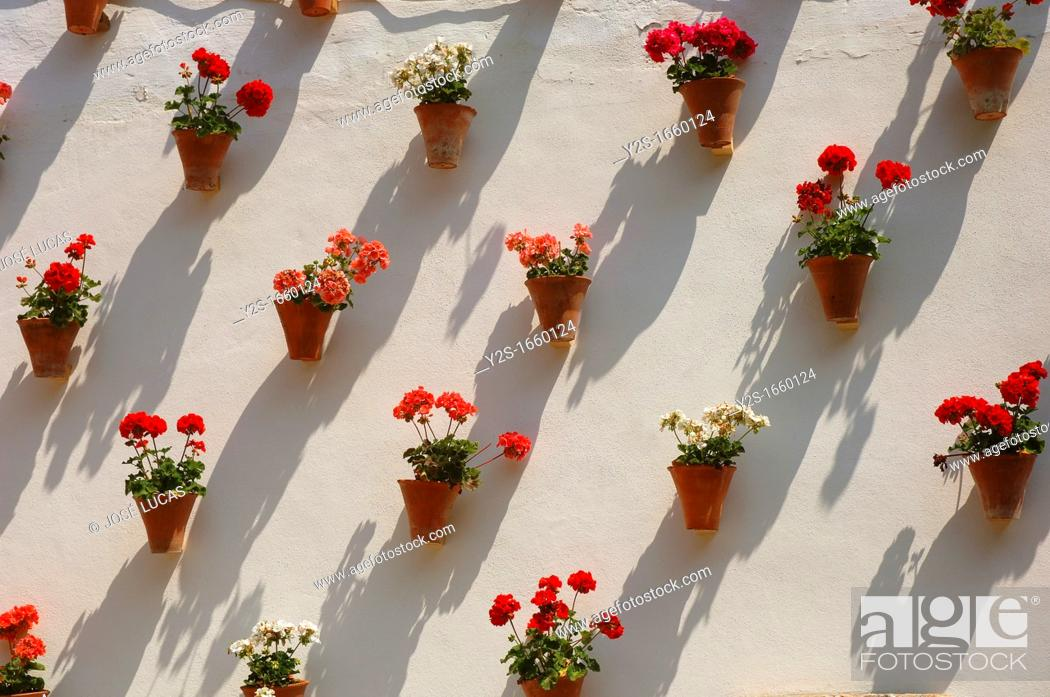 Stock Photo: Zoco, Flowerpots in typical courtyard, Cordoba, Region of Andalusia, Spain, Europe.
