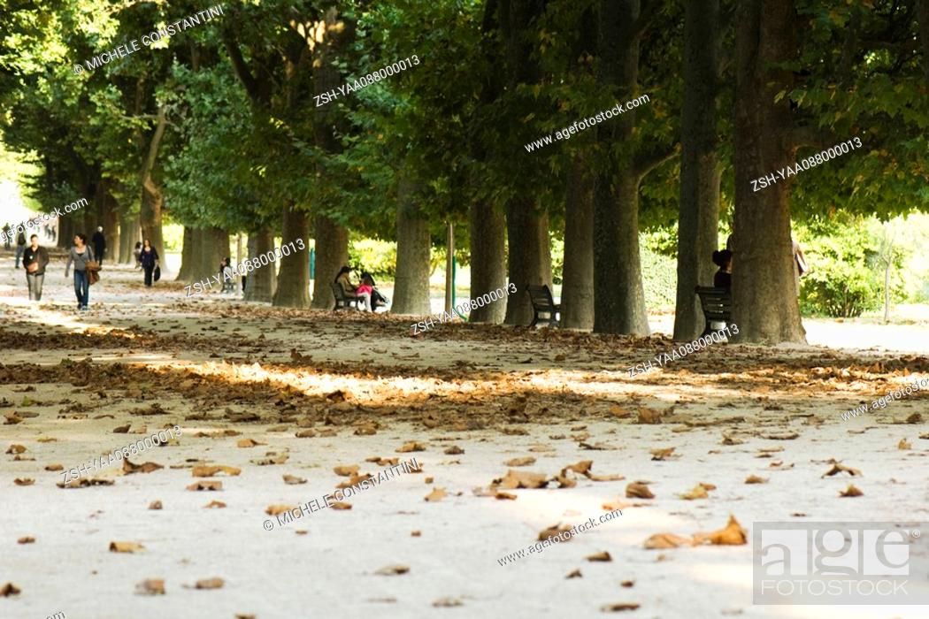 Stock Photo: France, Paris, people in tree-lined park.