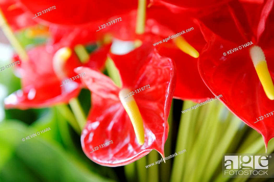 Stock Photo: Flowers, Funchal market, Funchal, Madeira Island, Portugal.