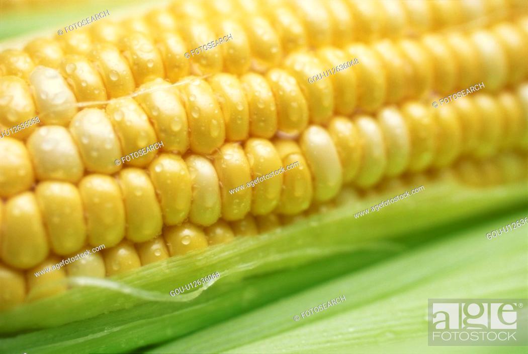 Stock Photo: Corn.