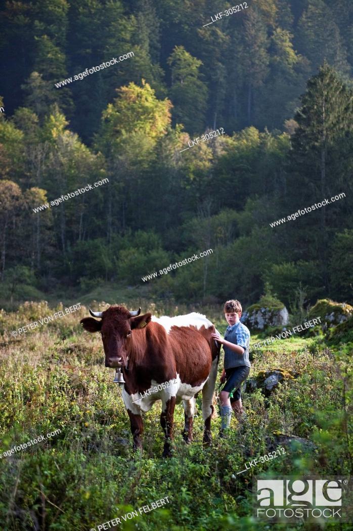 Stock Photo: Almabtrieb, Konigssee, Berchtesgadener Land, Upper Bavaria, Germany.