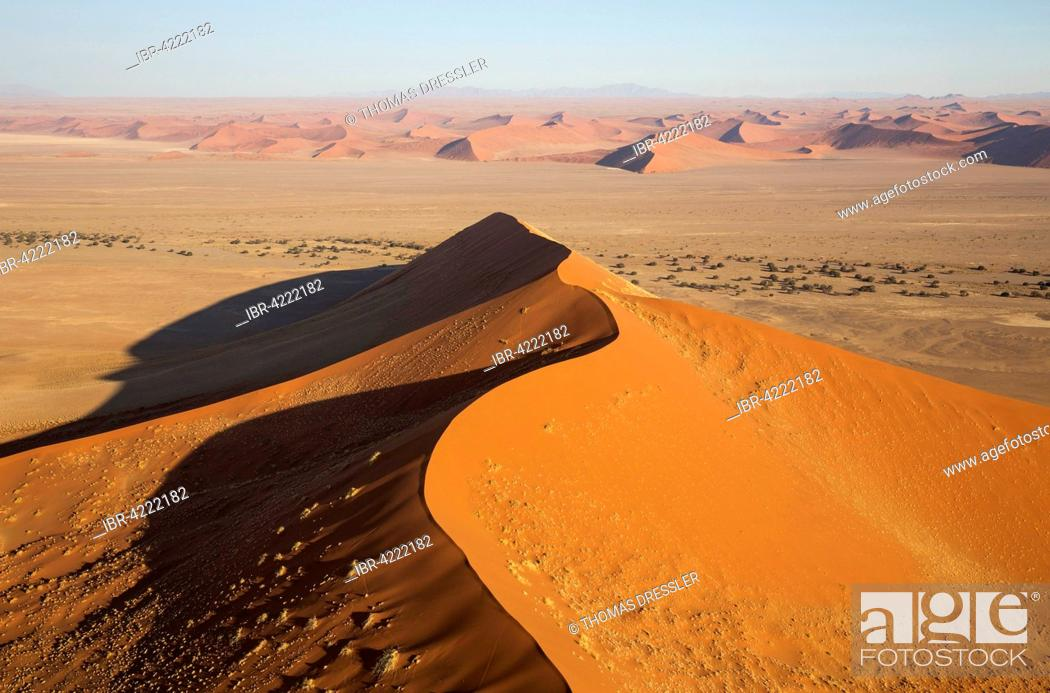 Stock Photo: Sand dunes in the Namib Desert, camel thorn trees (Acacia erioloba) growing along the dry riverbed of the Tsauchab river, in the evening, aerial view.