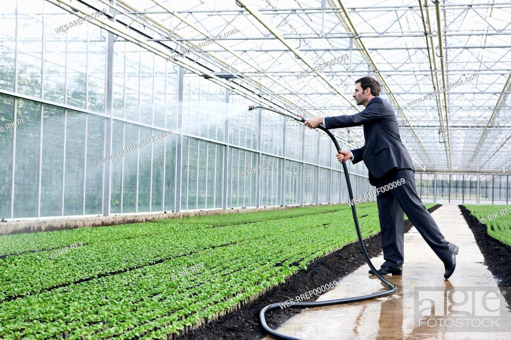 Stock Photo: Germany, Bavaria, Munich, Mature man in greenhouse watering seedlings.