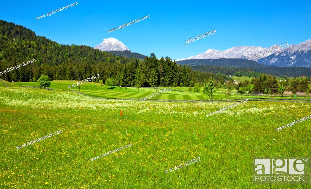 Stock Photo: blossoming mountain pasture with golf course.