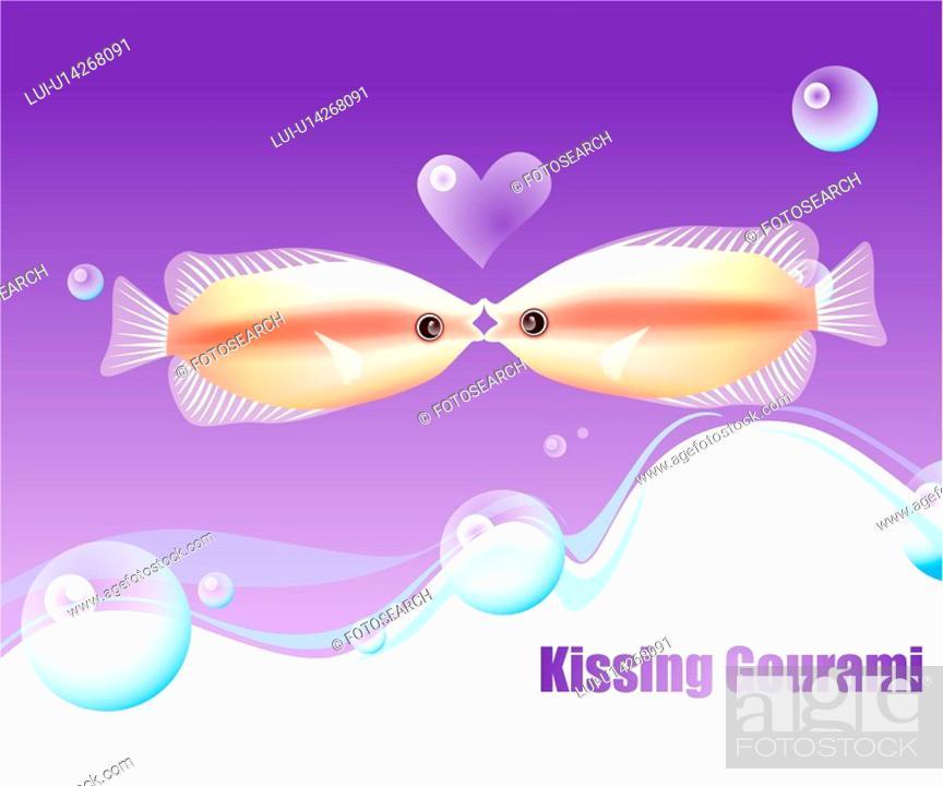 Stock Photo: fishes, sea, underwater, undersea, ocean, kissing gourami.