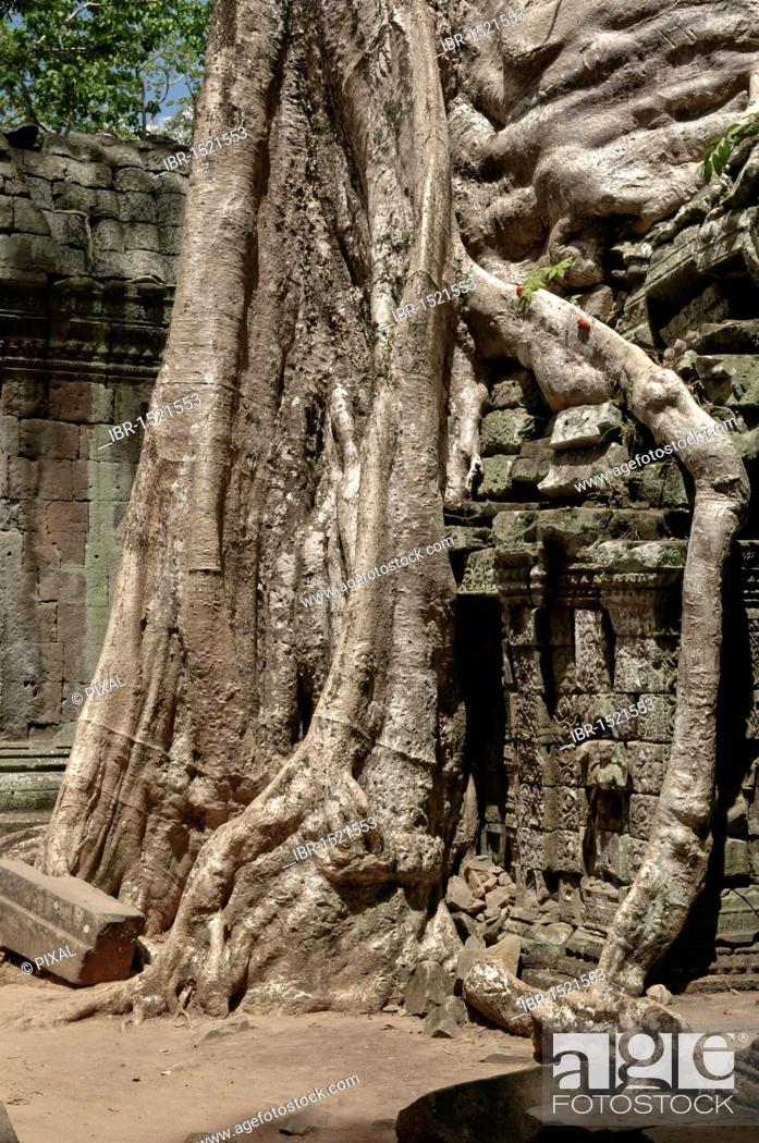 Stock Photo: Ta Prohm, Angkor Wat complex, Siem Reap, Cambodia, Southeast Asia, Asia.