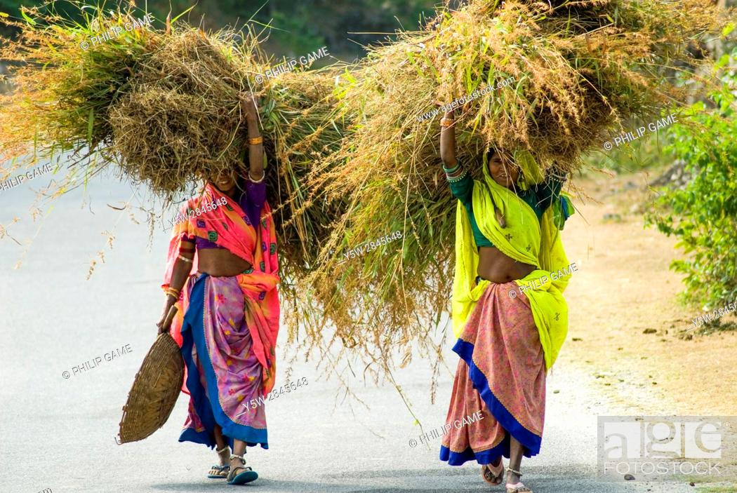 Stock Photo: Two rural women share a load of fodder, Rajasthan, India.