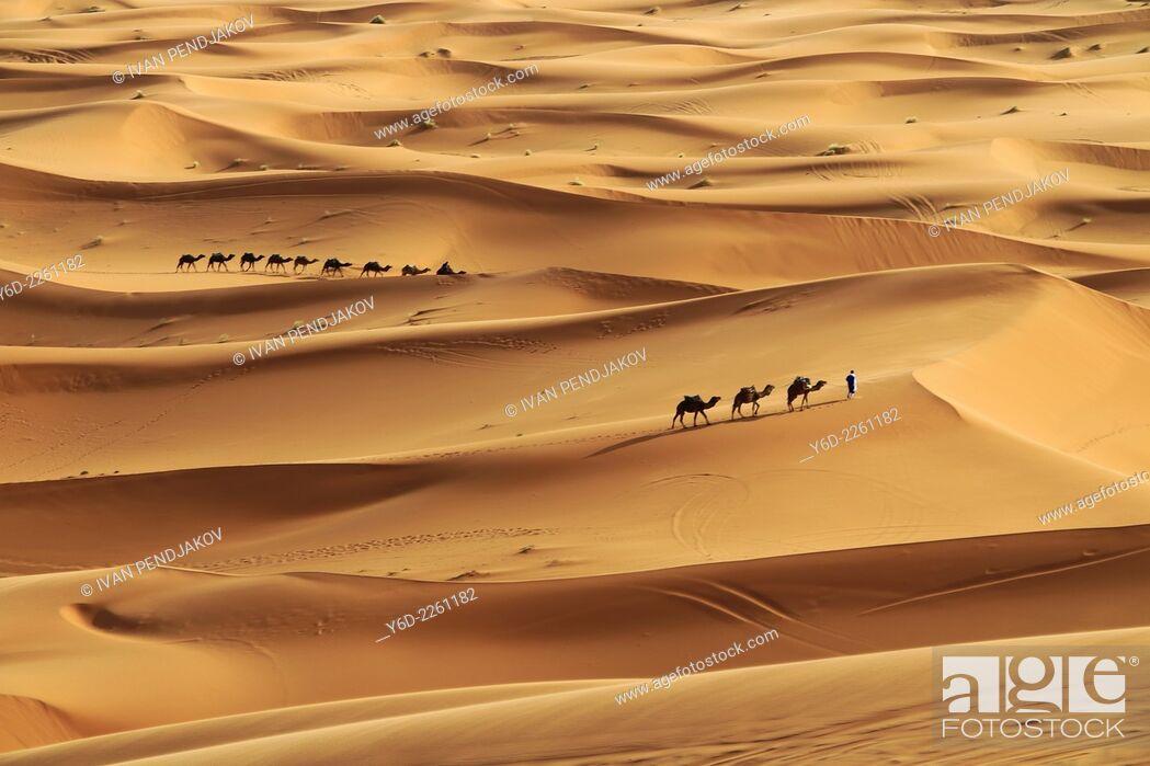 Stock Photo: Sand Dunes, Merzouga, Sahara Desert, Morocco.